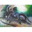 Tarantule, olej na lepence, 50 x 70